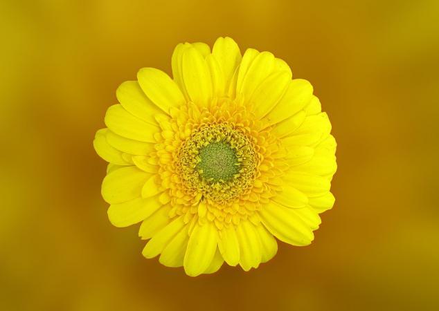 Renklerin Anlamları ve Psikolojik Etkileri: Sarı