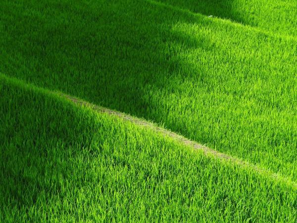 Yeşil Rengin Anlamı ve İnsan Üzerindeki Etkisi